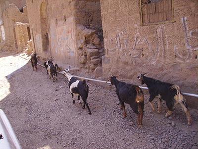 wadi_dar-27